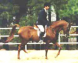 16h Straight Russian Show Horse Stallion